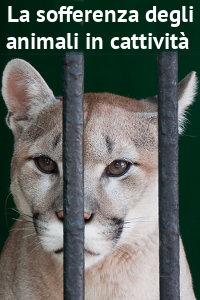 Copertina del video: La sofferenza degli animali in cattività