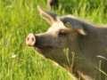 Video Bei momenti al rifugio Animal Place