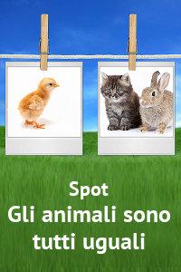 Copertina del video: Gli animali sono tutti uguali