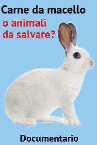 Copertina del video: Carne da macello - o animali da salvare?