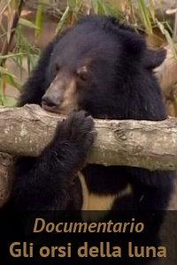 Copertina del video: Gli orsi della luna