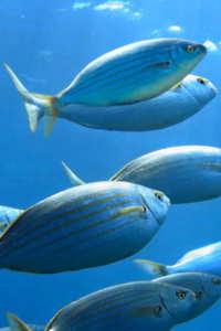 Copertina del video: I pesci, gli animali più sfruttati