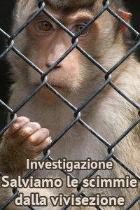 Copertina del video: Salviamo le scimmie dalla vivisezione