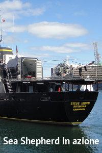 Copertina del video: Sea Shepherd in azione