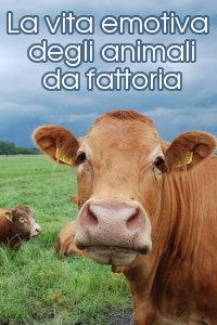 Copertina del video: La vita emotiva degli animali da fattoria